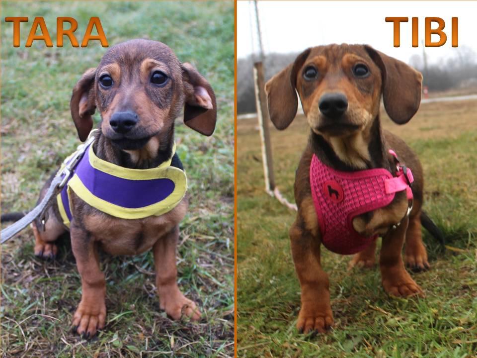 Tara és Tibi