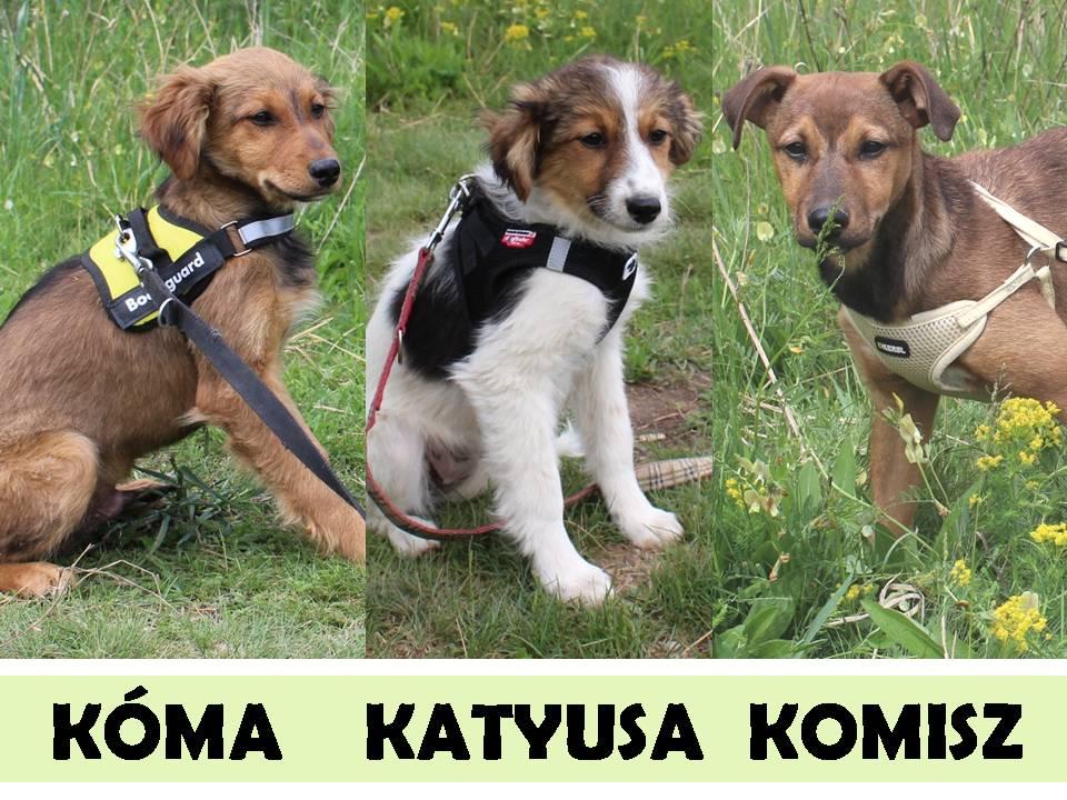 Kóma, Katyusa, Komisz