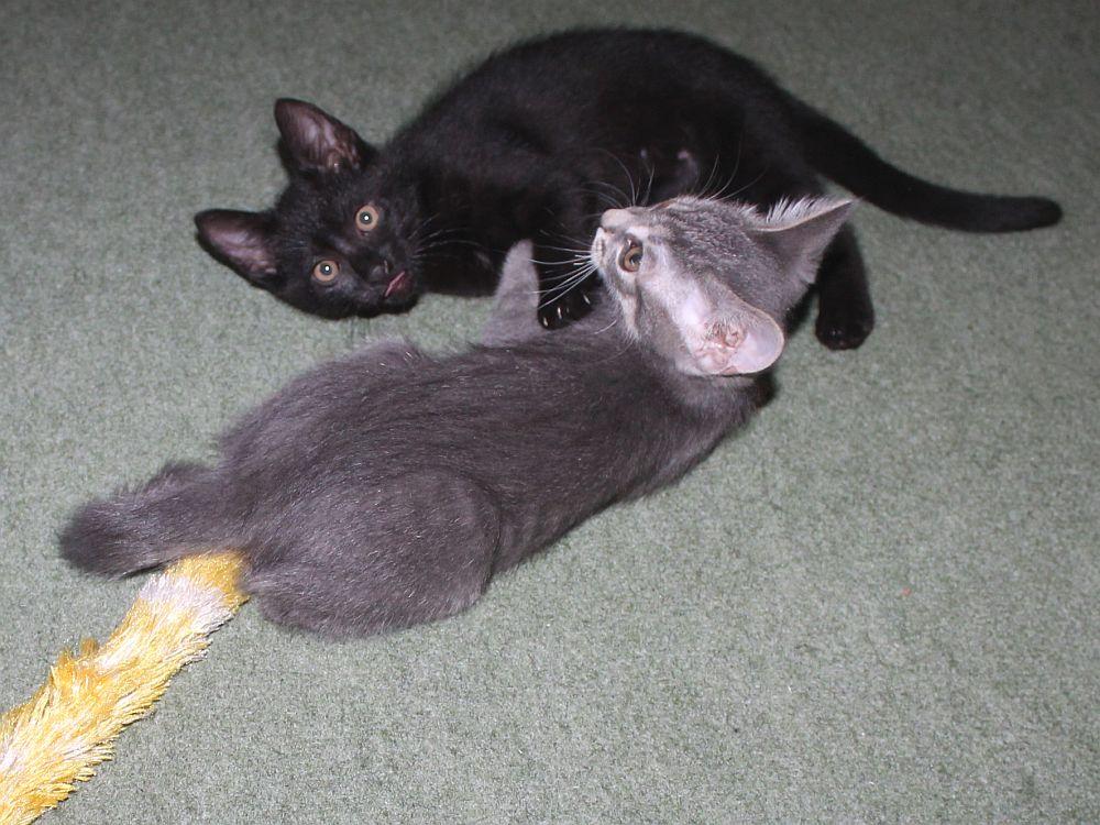 Medvinc és Surminc