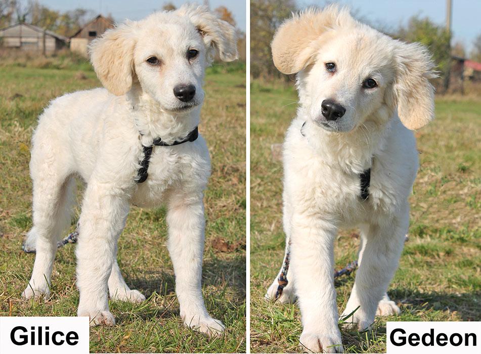 Gilice és Gedeon