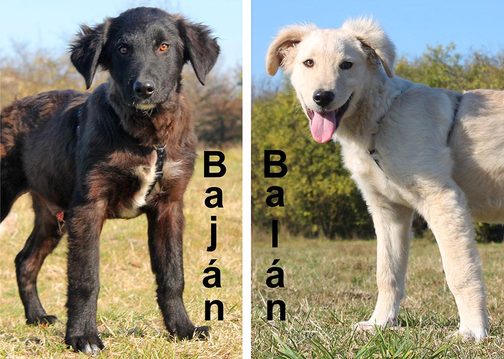Baján és Balán