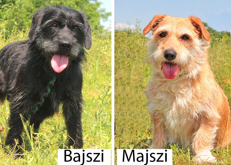 Majszi és Bajszi