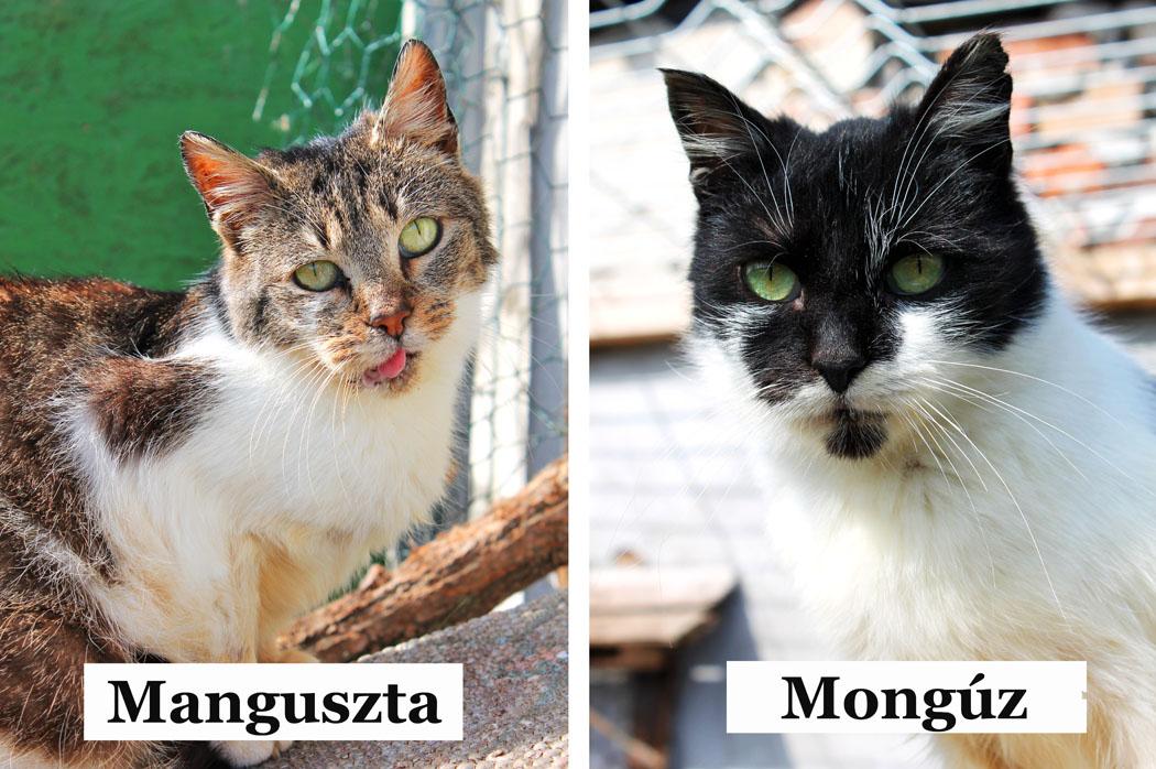 Manguszta és Mongúz