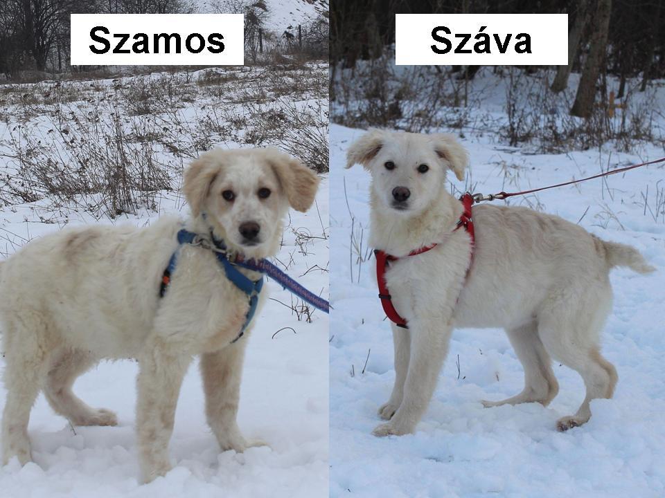 Szamos és Száva