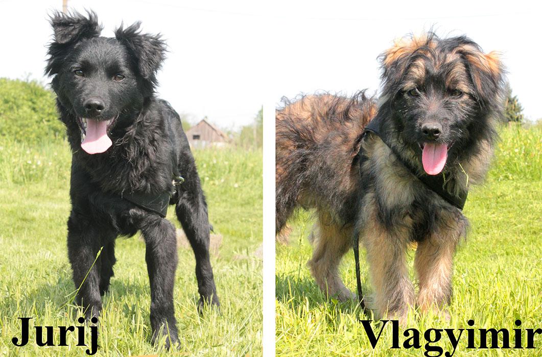 Jurij és Vlagyimir
