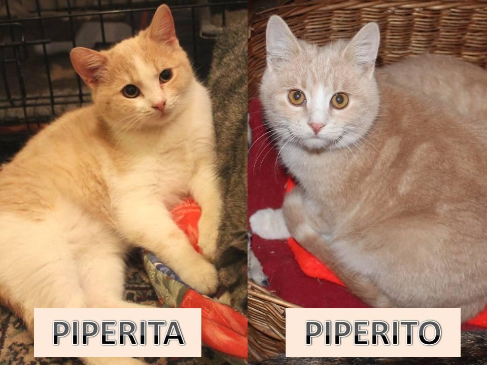 Piperita Piperito