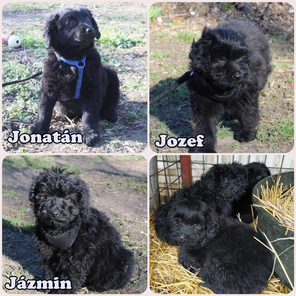 Jázmin, Jozef, Jonatán